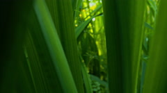 Dolly out shot through green leaves close up Stock Footage