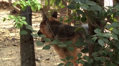 Dog behind a fence Stock Footage