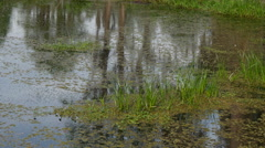 Marshy water showing surface ripples caused by tiny pond life. Stock Footage