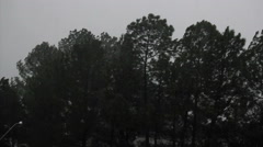Several storm. Trees. Forest. Stock Footage