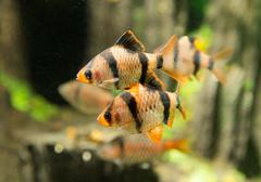 Fish in an aquarium Stock Photos
