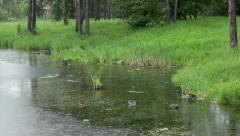 Wild Duсks On A Pond 3. Stock Footage