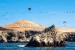 Ballestas Islands, Paracas National Reserve in Peru Stock Photos