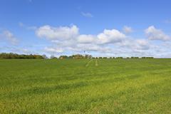 yorkshire wolds farm with wind turbine - stock photo