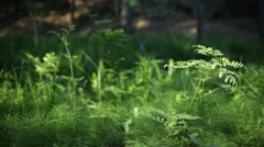 Forest floor Stock Footage