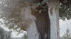 Tree hole establishing shot Stock Footage