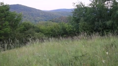 Bükk forest in northeastern Hungary Stock Footage