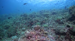 Colorful coral reef in Philippines Stock Footage