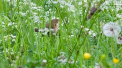 Birds in the high grass Stock Footage