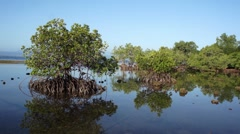 Mangrove forest at the coast of the island of Palawan. Philippines. Stock Footage