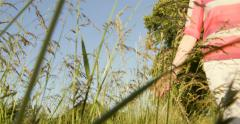 Low view of woman hand caressing tall green grass Stock Footage