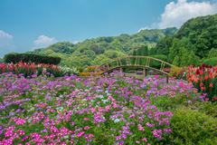 Flowers and a bridge by Doi Inthanon Stock Photos