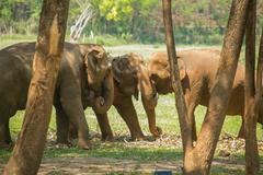 Elephants under trees - stock photo