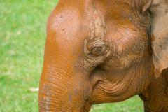 Elephant eye close up - stock photo