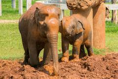 Baby elephant with another elephant - stock photo
