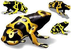 Yellow Banded Dart Poison Frog Stock Illustration