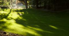 Green lawns and big trees in green park in sunny day of summer season Stock Footage