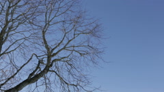 Branches swaying in the wind Stock Footage