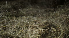 Dust in the hayloft Stock Footage