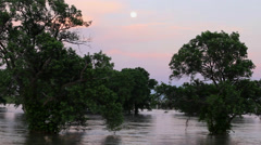Flooding in Texas: Oak trees standing in water Stock Footage