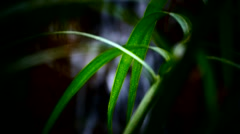 Tropical forest waterdrop Droplet moisture on leaves Arkistovideo