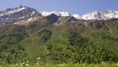 Alpine meadow , high quality - pan Stock Footage