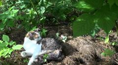 Cute tabby cat wash itself on sunlight between garden plants Stock Footage