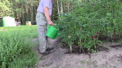 Retired man watering tomato plant bed on garden outdoor Stock Footage