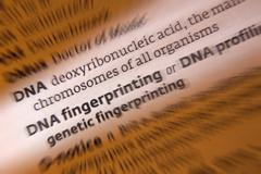 DNA Fingerprinting - DNA Profiling Stock Photos