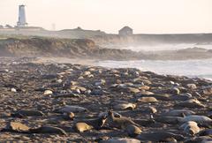 Sea lions Big Sur Stock Photos