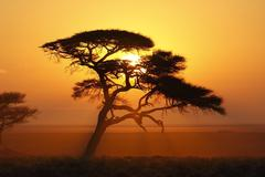 African Sunrise - Namibia Stock Photos
