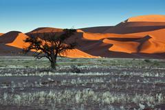 Stock Photo of Namib-nuakluft Desert - Sossusvlei in Namibia