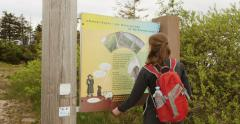 Female hiker with red backpack reading forest facts Stock Footage