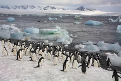 Penguins - Antarctica Stock Photos