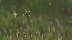 Flying mosquitos in slow motion Stock Footage