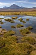 Atacama Desert - Chile Stock Photos