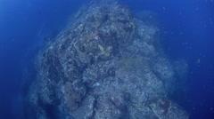 Deep coral reef drift underwater Stock Footage