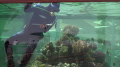 Diver clean aquarium in Coral World aquarium in Eilat Israel Stock Footage