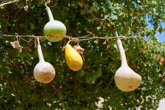 Ornamental gourds hanging on a line - stock photo