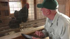Chicken farmer using an ipad in a chicken coop - stock footage