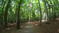Forest in germany - Bavaria Stock Footage