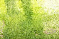 Neon green algae Stock Photos