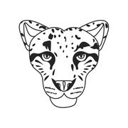 Wild cat, irbis, leopard, snow bars in vector - stock illustration