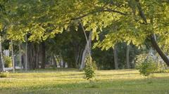 Summer Park Tree Leaves - stock footage