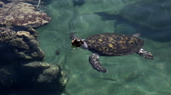 Green sea turtle in the Underwater Observatory Marine Park in Eilat, Israel Stock Footage