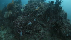 Fishing net covering coral reef destroy  - stock footage