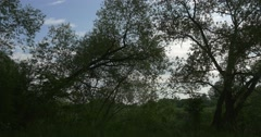 Stock Video Footage of Trees Near The Pond, Lake, River, Green Trees on The Opposite Bank, Summer