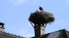 Storks in a nest in Alsace, France Stock Footage