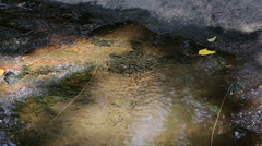 Streams that dry up in the tropical forests of Thailand. Stock Footage