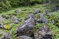 Part of authentic rockery - stock photo